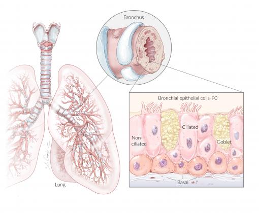 NhBE-P0 Lung